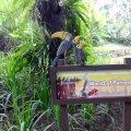 image 08-kuala-lumpur-bird-park-klbp-jpg