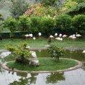 image 10-kuala-lumpur-bird-park-klbp-jpg