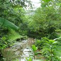image 15-kuala-lumpur-bird-park-klbp-jpg