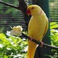 Birds - Kuala Lumpur Bird Park, Malaysia - Sep 2011