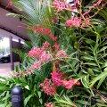 image 06-red-vanda-orchids-jurong-bird-park-sg-2011-jpg