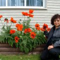 image 016-tr-beautiful-poppies-right-side-garden-of-town-hall-jpg