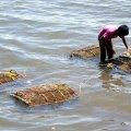 image 004-checking-crabs-jpg