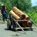 image 007-just-a-few-logs-for-the-bbq-jpg