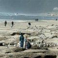 image 065-seagulls-at-cannon-beach-2-jpg