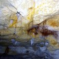 image 13-tree-roots-growing-through-the-cave-ceiling-jpg