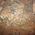 image 31-cave-coral-jpg