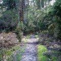 image 03-junee-river-cave-walking-track-jpg