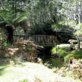 image 05-junee-river-cave-walking-track-jpg