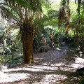image 07-junee-river-cave-walking-track-jpg