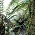 image 08-junee-river-cave-nearly-there-jpg