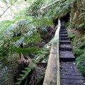 image 09-junee-river-cave-boardwalk-jpg