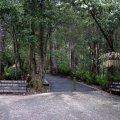 image 02-marakoopa-cave-track-jpg