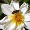 image bee-on-bloom-1-jpg
