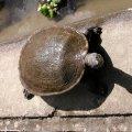 image 010-freshwater-turtle-up-close-jpg