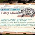 image 011-freshwater-turtle-info-jpg