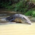image 013-agro-the-croc-jpg