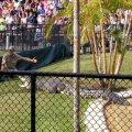 image 018-feeding-croc-1-jpg