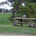 image 001-birds-at-rosedale-picnic-area-jpg