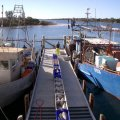 image 016-unloading-fish-at-lakes-entrance-fishing-co-op-jpg