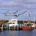 image 025-pelicans-in-flight-cunninghame-arm-lakes-entrance-jpg