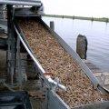 image 010-grand-isle-sorting-shrimps-jpg