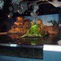 image 007-billabong-melbourne-aquarium-jpg