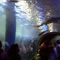 image 009-melbourne-aquarium-oceanarium-jpg