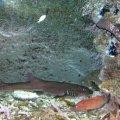 image 018-black-cod-and-small-shark-jpg