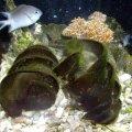 image 023-port-jackson-shark-egg-case-jpg