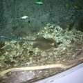 image 028-blue-spotted-stingray-and-spectacled-seasnake-jpg