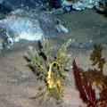 Melbourne Aquarium - Sep 2006