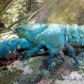 image 003-spiny-freshwater-crayfish-jpg