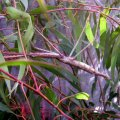 image 006-stick-insect-jpg
