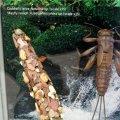image 010-caddisflymayfly-larvae-specimens-jpg