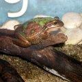 image 021-tree-frog-jpg