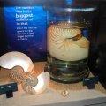 image 023-nautilus-shell-jpg