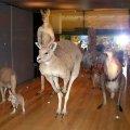 image 027-marsupials-specimens-jpg
