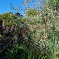 image bromeliad-clump-a-jpg