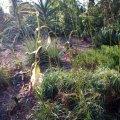 image bromeliad-clump-b-jpg