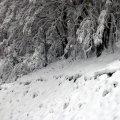 image 058-mountainside-view-going-down-mt-buller-jpg