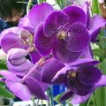 ORCHIDS - Miscellaneous