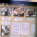 image 025-nt-alice-springs-mecca-date-farm-info-board-jpg