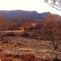 image 060-wa-bungle-bungle-wildfire-aftermath-jpg