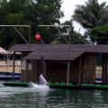 image 024-sentosa-pink-dolphin-in-action-jpg