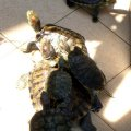 image 059-turtles-in-temple-compound-jpg