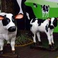 image 05-cows-statues-jpg