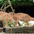 SINGAPORE Zoo  - Sep 2010