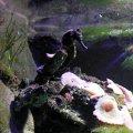 image 002-seahorse-jpg