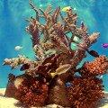 image 005-coral-display-jpg